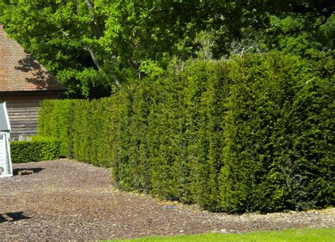 Individual Hedging Plants from Practicality Brown