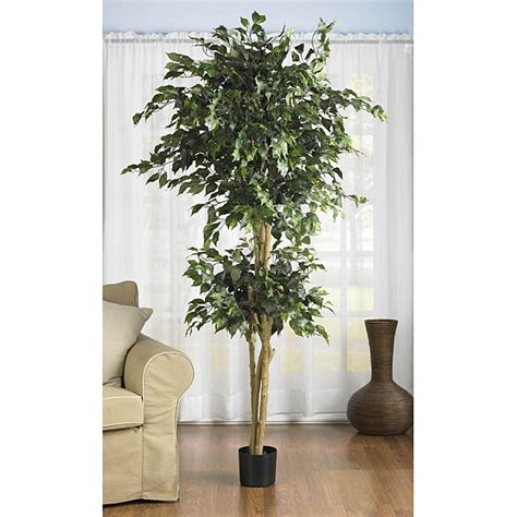 Shop Double Ball 6-foot Ficus Silk Tree - Free Shipping