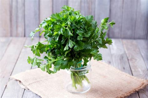 Is Parsley Poisonous to Cats and Dogs?
