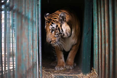 Animals Rescued From the 'Worst Zoo in the World' in Gaza
