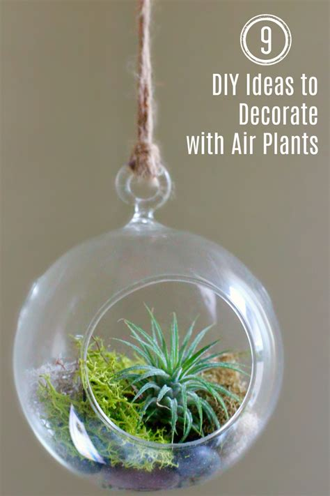 9 NOW Ideas: Decorate with Air Plants | Make and Takes