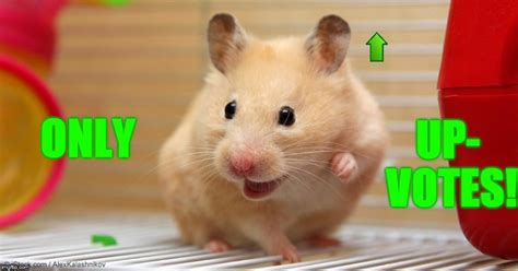 Hamster Weekend July 6-8 a bachmemeguy2, 1forpeace, and