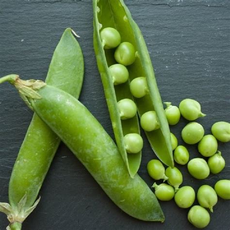 Pea Seeds - Lincoln | Vegetable Seeds in Packets & Bulk