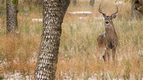 Teenagers seen assaulting deer on video charged with