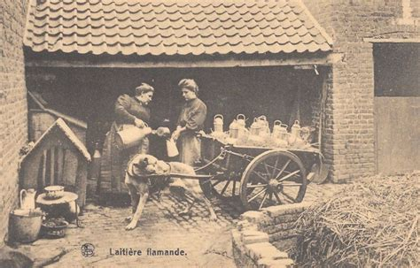 25 Interesting Vintage Pictures of Dog Carts and Milk